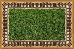nice_lawn2.jpg