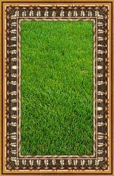 nice_lawn3.jpg